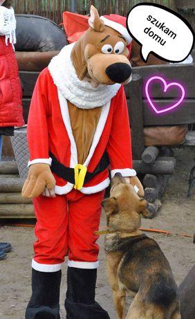 Dom dla Zyzia adopcja za darmo aktywny kochany psiak kastrat umowa