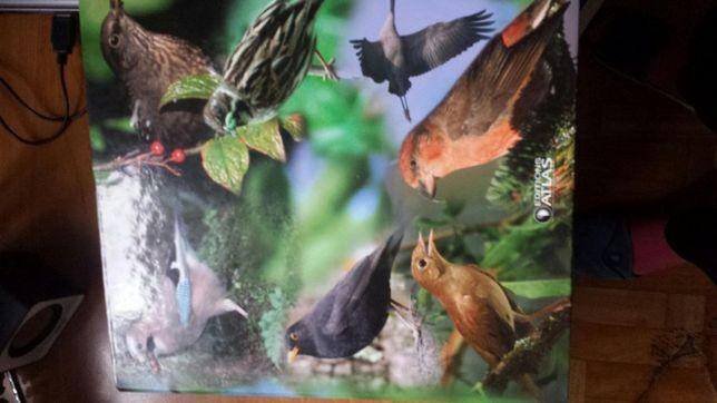 Przewodnik po ptakach