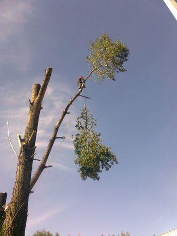 Wycinka Pielęgnacja Drzew Alpinistycznie - Arborysta