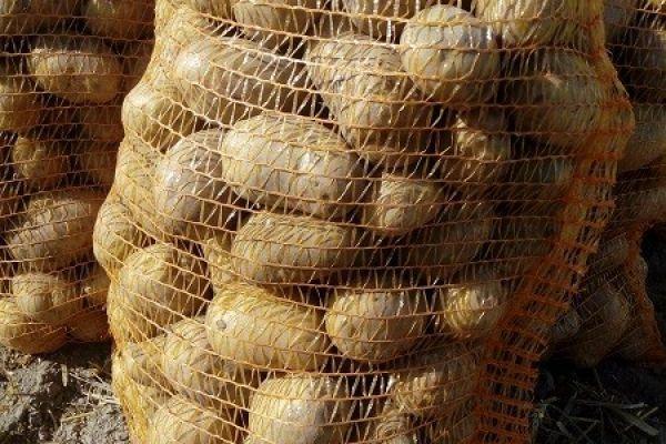 Ziemniak satina, 1 rok po centrali, jadalny, sadzeniak.