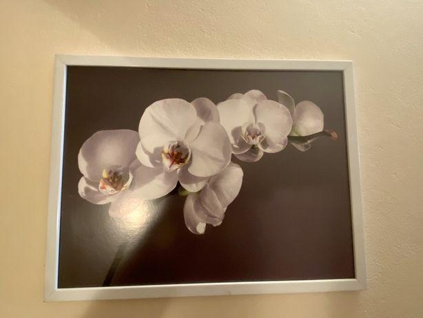 Obrazy- biale kwiaty