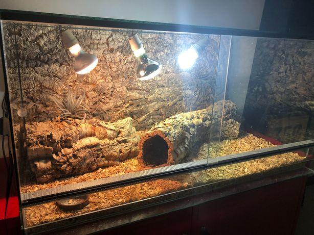 Szklane terrarium bez wad!