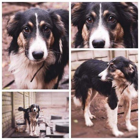 Верный друг пес Норд, собака, 1,5 года, кастрирован, больше среднего