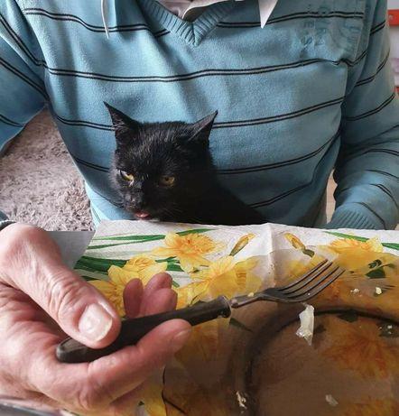 Gacus szuka domu czarny kot kocur