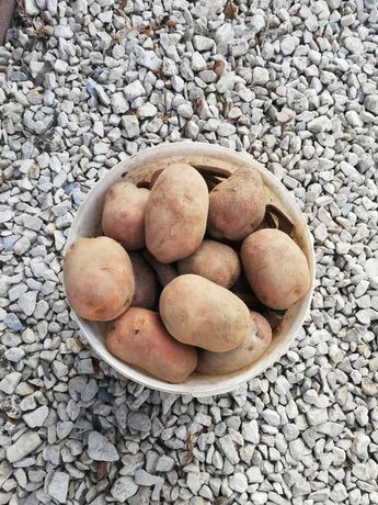 Ziemniaki Bellarosa okazja