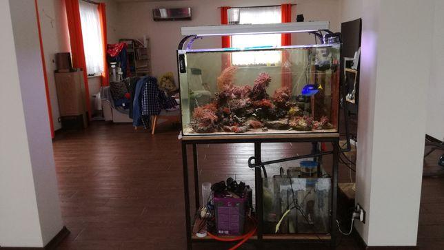 Akwarium morskie + życie