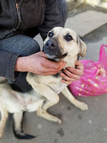 Анфиса, собака в дар, в хорошие руки