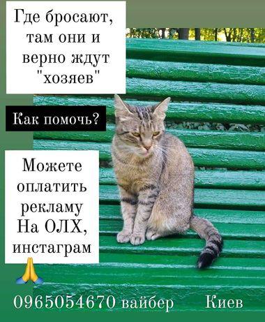 Вынести домашнюю кошку, норма?