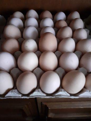Smaczne jajka wiejskie