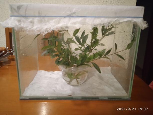 Akwarium terrarium komplet Straszyki Diabelskie 10sztuk