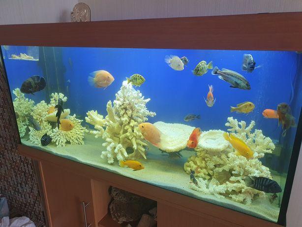 Продам аквариум Juwel 350
