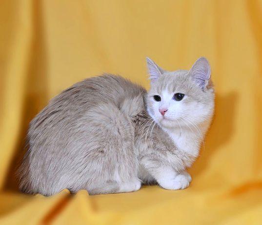Шукаю дім та люблячу родину-молодий кіт Абрикос, 4.5міс., кошеня.