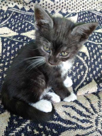 Oddam koty i kotki