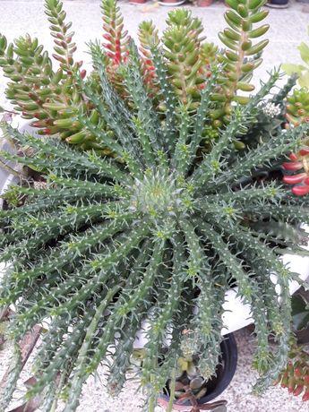 Plantas em Vila Verde