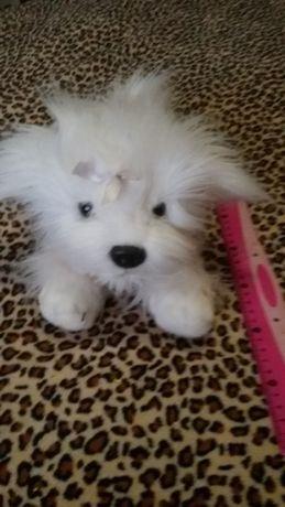 Белая пушистая собачка!