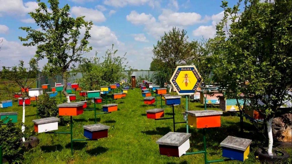 Продаю бджолопакети Ганновцы - изображение 1