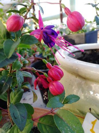 Рассада овощей , цветов, пряности, кустарники