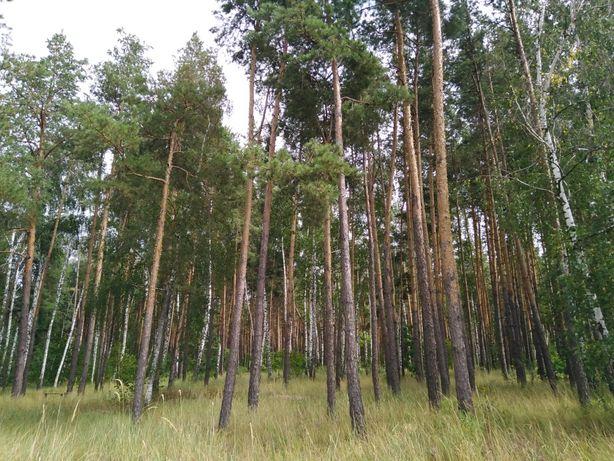 Продам участок в лесной зоне