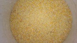 kukurydza paszowa mielona kukurydza gnieciona workowana oraz Big Bag