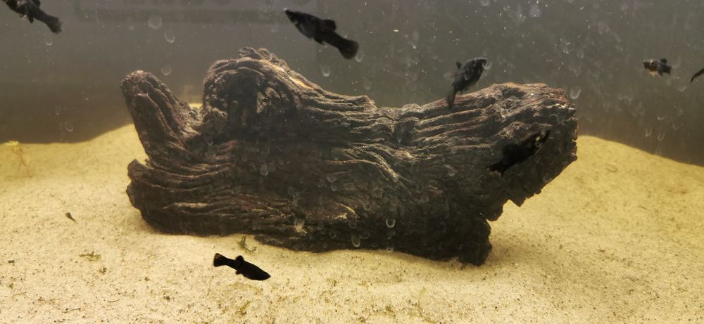 Sztuczny korzeń do akwarium Toruń - image 1