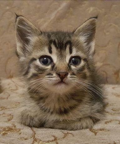 Маленький котенок в заботливые руки