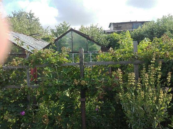 Sprzedam działkę ogrodową w Lubinie