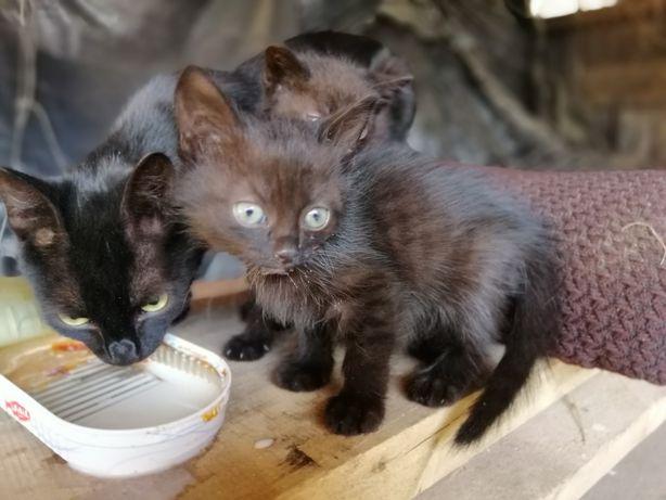Oddam małe kotki