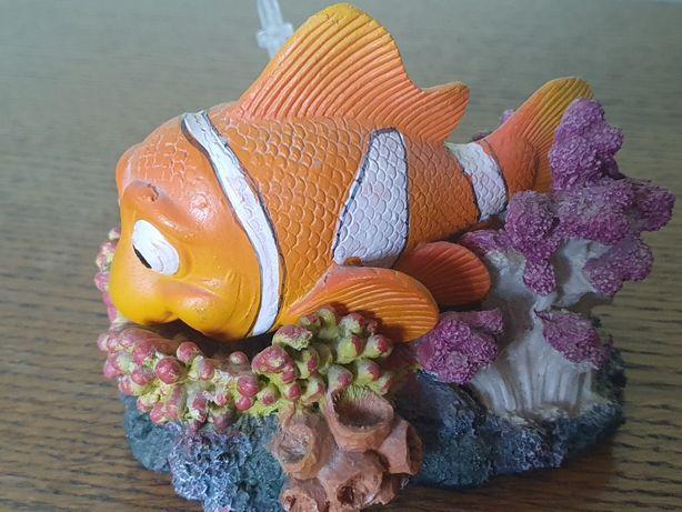 Rybka Nemo do akwarium nowa