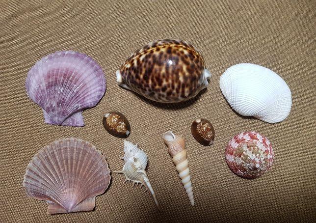 Набор морских ракушек