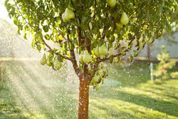 Обрезка (подрезка) плодовых, садовых деревьев. В Одессе и области