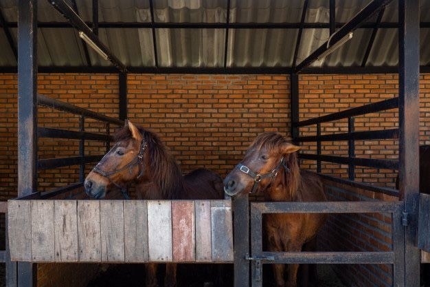 Aluguer de estábulo para cavalos / Espaço para cavalos