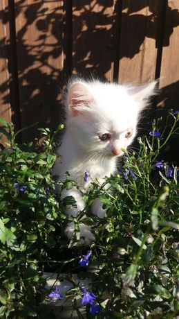 Солнышки на счастья. Котята. Мальчики и девочки.