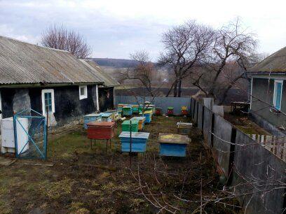 Бджолосімї з вуликами