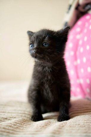 Котята на любой цвет и вкус