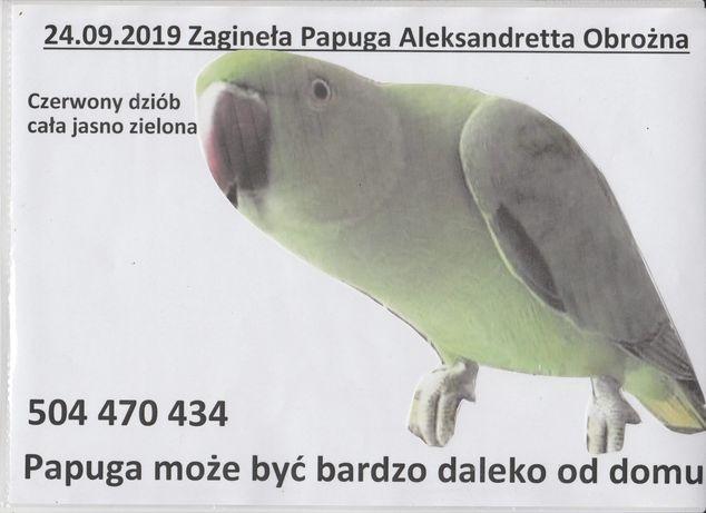 Dalej szukamy 24 września 2019 zagineła aleksandretta obrożna