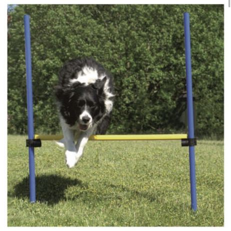 Barreira de salto de agility para cães