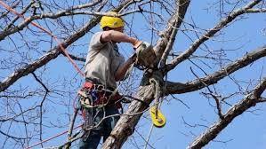 Кронирование деревьев в Кременчуге и области