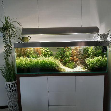 Piękne akwarium z całym wyposażeniem- ZESTAW !