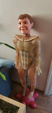 Ciało Człowieka szkielet