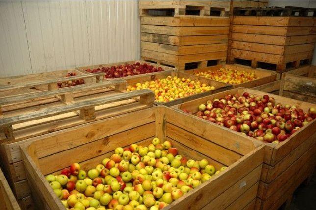 Jabłka prosto od sadownika kartony 10kg, 15kg, 20kg