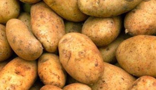 Продам картоплю. Продам картошку. Продам бульбу.