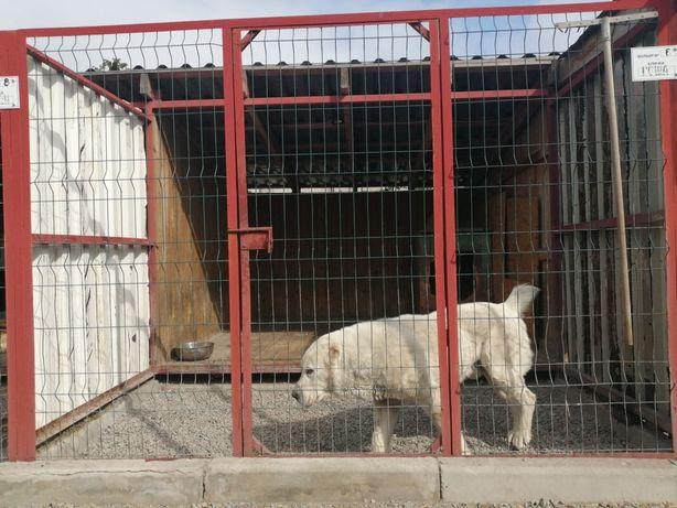 Передержка (гостиница) для собак, животных.