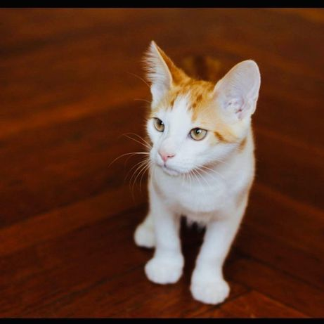 Котенок, Луи 5 мес,Ласковый и нежный.