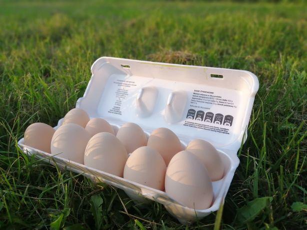 Jaja kurze z wolnego wybiegu