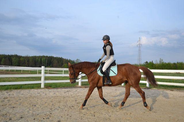 Klacz koń 6 lat idealna do dalszego treningu