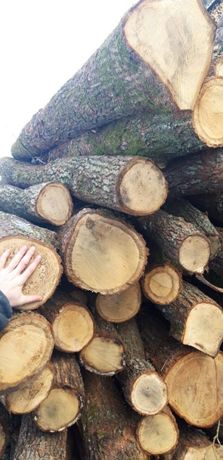Drewno w walkach Dab Brzoza