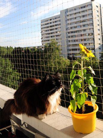 Siatki balkonowe przeciwko gołębiom i wypadaniu kotów itp.