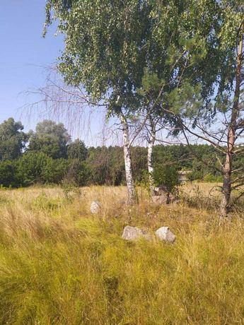 Участок возле леса, с. Свидивок