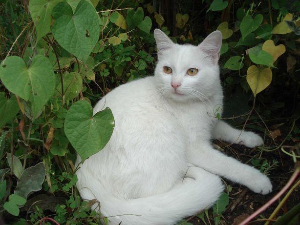 Котенок (кошка) Алиса, 6 месяцев, ищет домашний уют и доброго хозяина