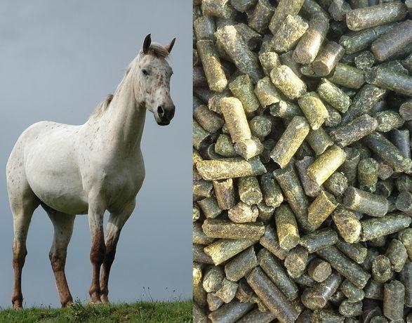 Lucerna granulowana (pellet) 20kg/1t - źródło białka dla koni, bydła